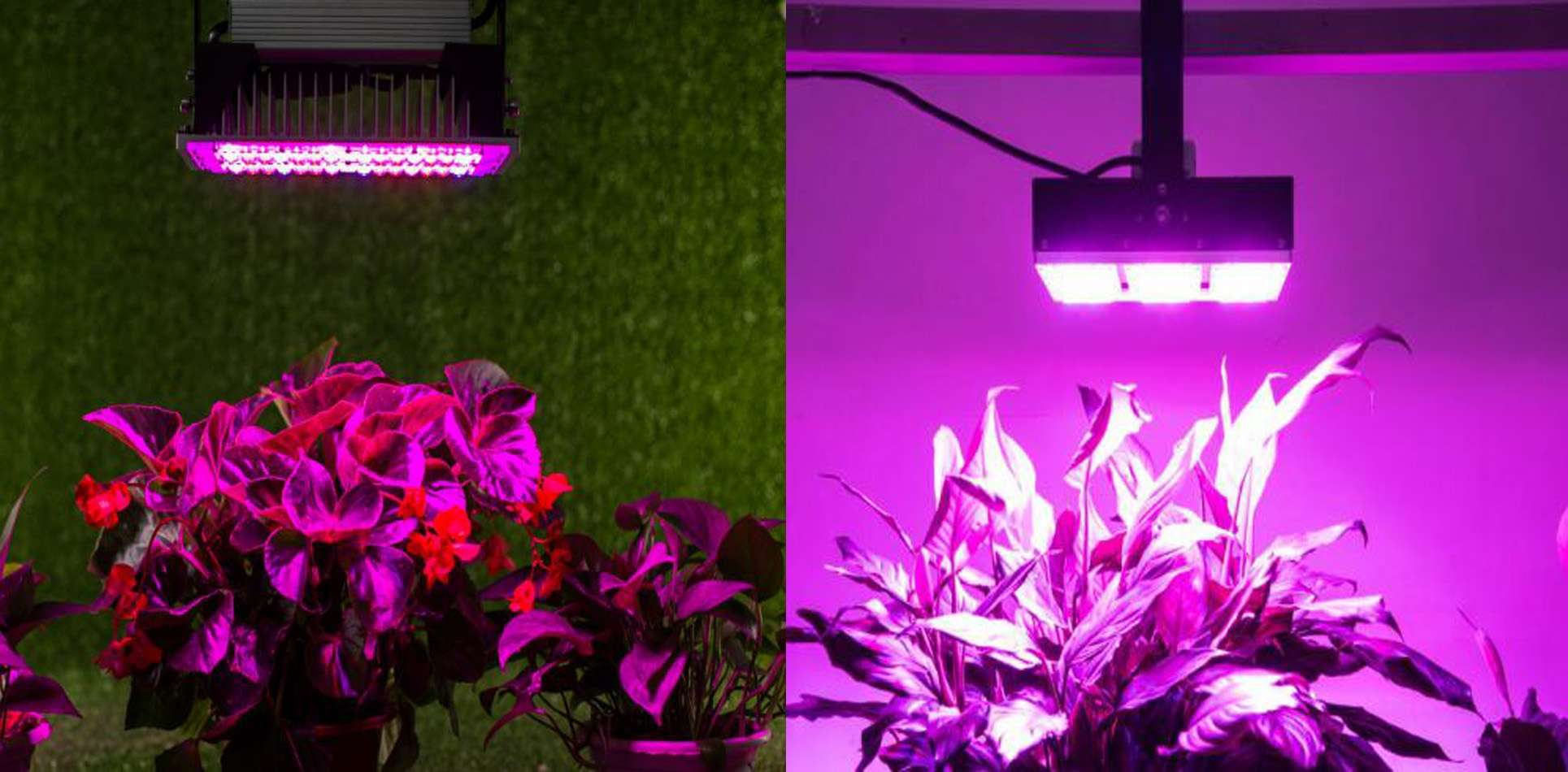 Full Spectrum Led Grow Lights The Best Led Sourcing