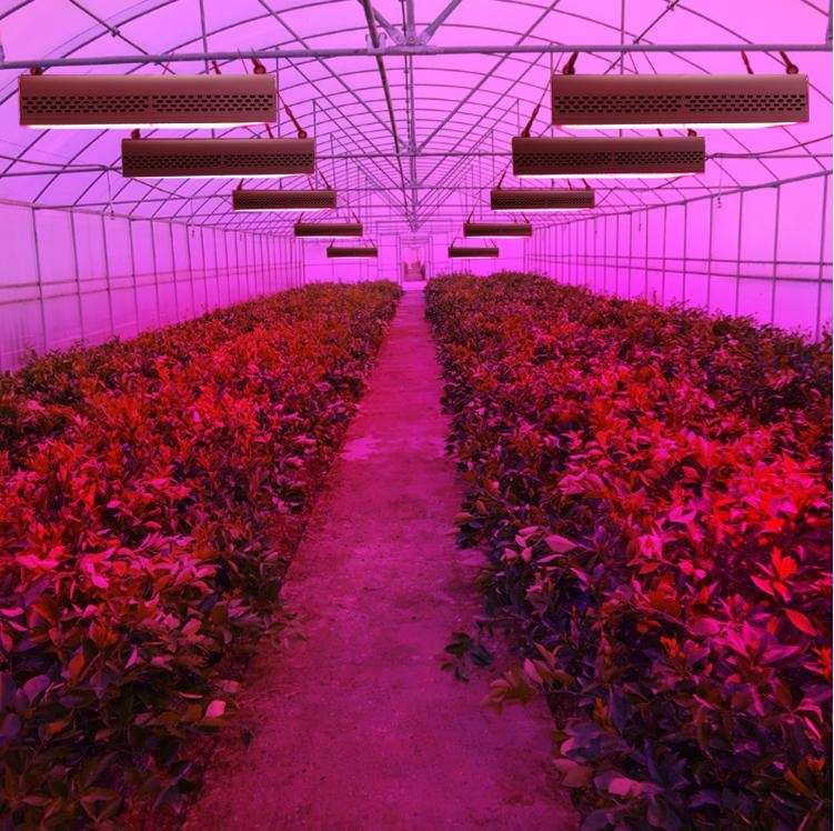 LED Grow Lights - The Best LED Sourcing Agent: Penglight